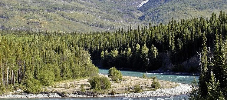 The Yukon River with mountain peaks and pines