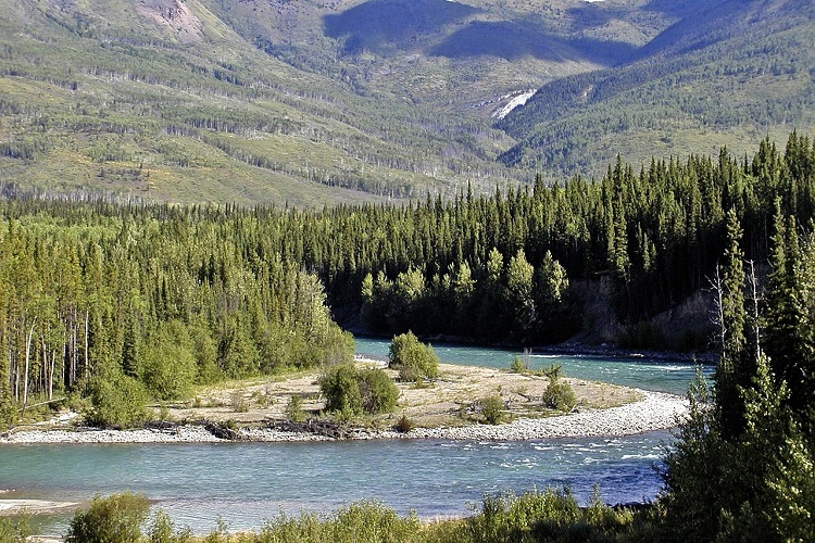 The Yukon River with pines and a mountain peak in the background