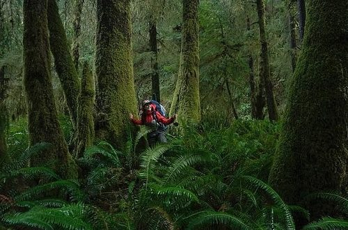 Photo by Jennah Stillman. Women in the midst of a lush, green forest