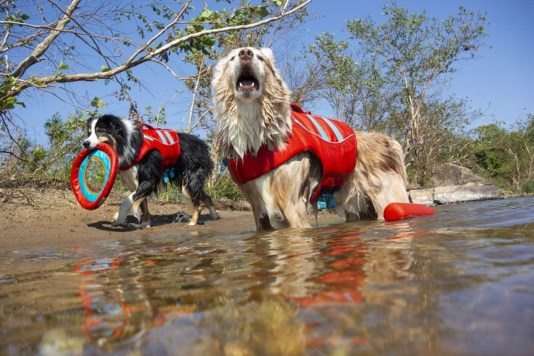 Two dogs wearing Ruff Wear water vests and playing Frisbee