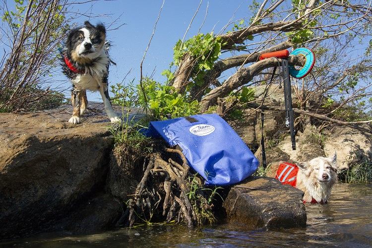Dog shaking off water next to the Big Creek Backpack