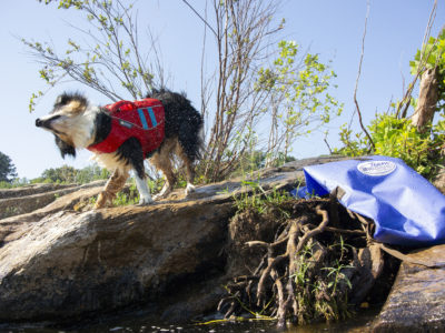 Dog shaking off water next to a Team Watershed Drybag